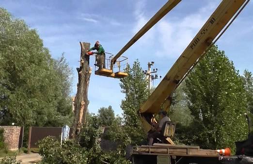 Садово-парковые работы (обрезка деревьев и др.)